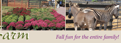 Round Hill Farm - Fall Fun for the entire family!
